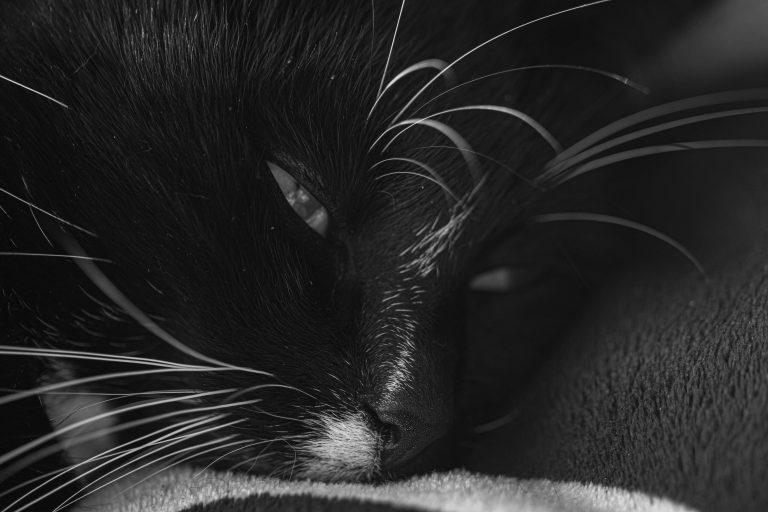 blacky zwartwit